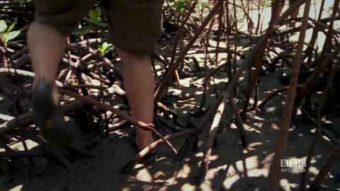 Fiji - Episode 4 Trailer