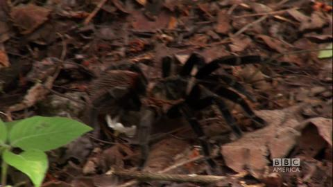 Deadly Bugs and Tarantulas