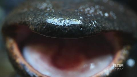 Episode 9 Trailer: The Giant Salamander