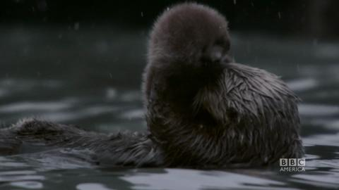 Mama and Baby Otter: Squee