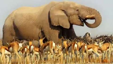 Africa: The Expedition of a Lifetime