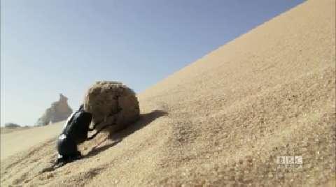 Africa: A Tiny Hero of the Sahara